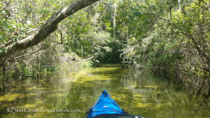 Kayaking Gissy Spring Run / Indian Creek ©2019 All rights Reserved