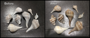 Seashell Restoration - Before and After