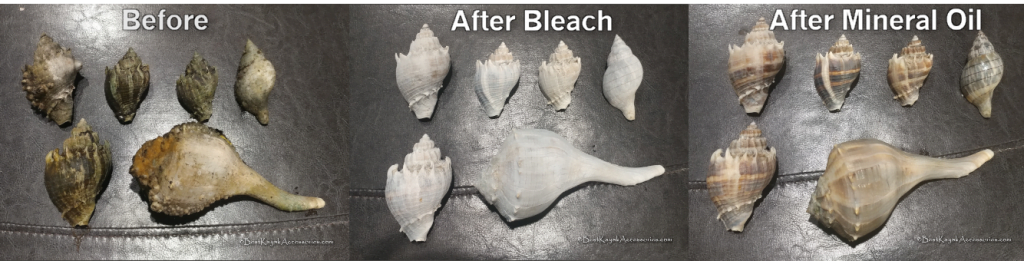 Seashell Restoration 3 step process ©2020 Best Kayak Accessories