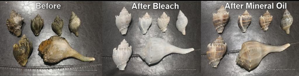 Seashell Restoration 3 step process ©2020 Best Kayak Accessories